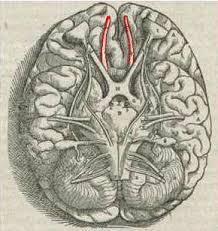 Parkinson's disease 4