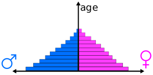 a pyramid of pupulation statistics